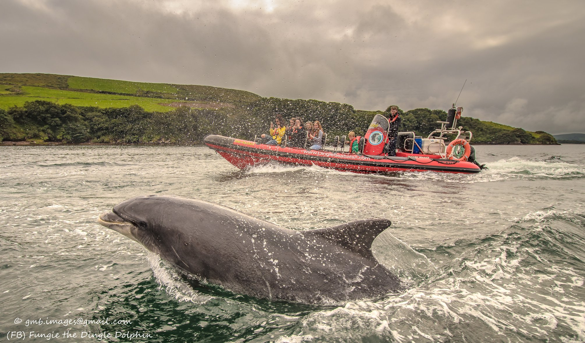 dingle irland delphin
